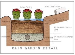 Rain Garden Detail Coloured jpeg